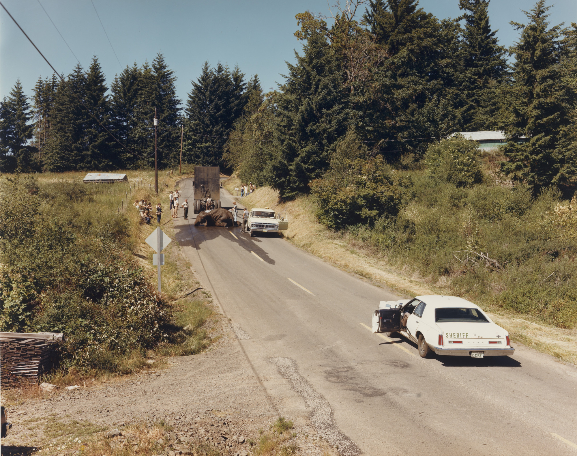 Joel Sternfeld. Exhausted Renegade Elephant, Woodland, Washington. June 1979