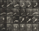 Eadweard J. Muybridge. Movement of the Hand, Beating Time: Plate 535 from Animal Locomotion. 1884-86