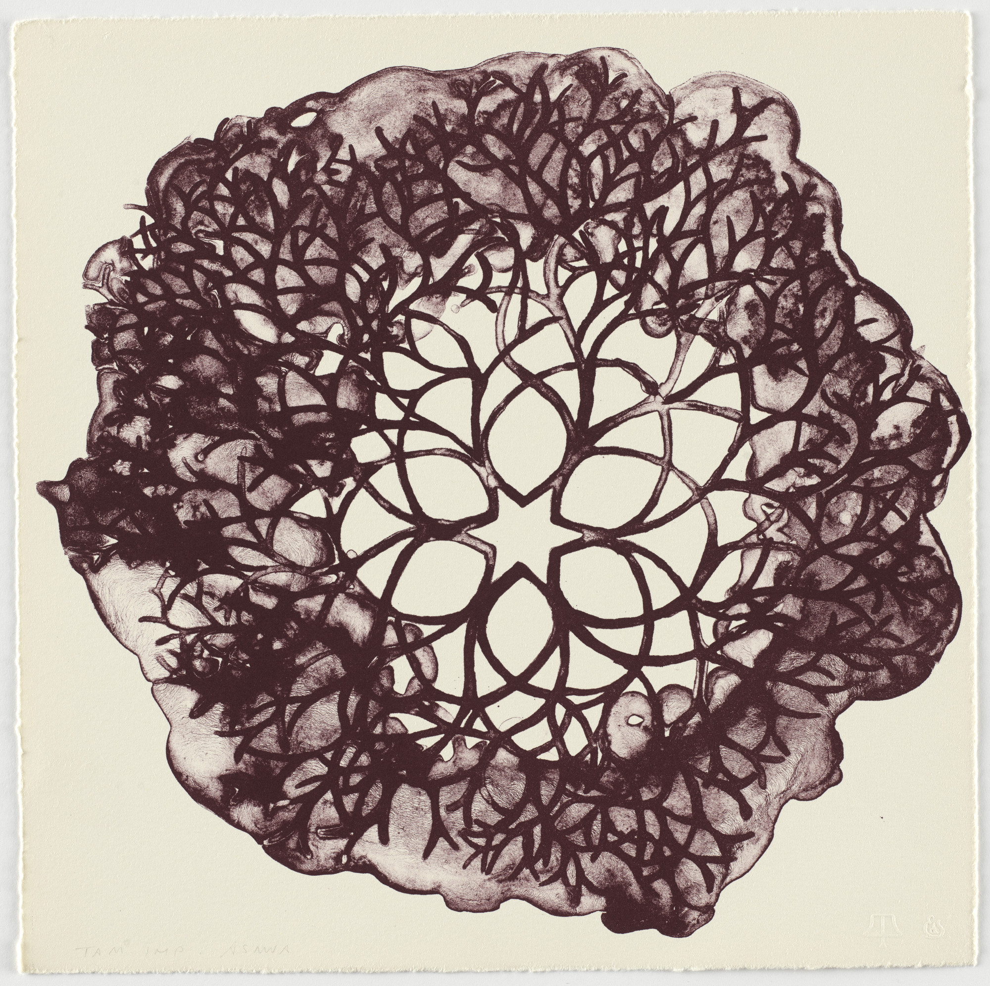 Ruth Asawa. Untitled from Flowers. 1965 | MoMA