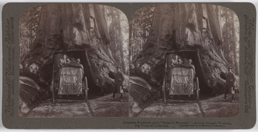 "Underwood and Underwood. President Roosevelt Amid ""Nature's Wonders""—Driving through Wawona, Big Trees of California. 1903"