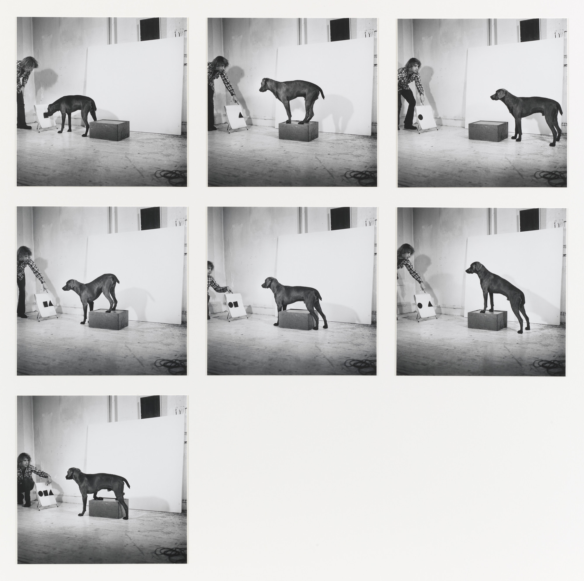 William Wegman. Before, On, After Permutations I. 1972