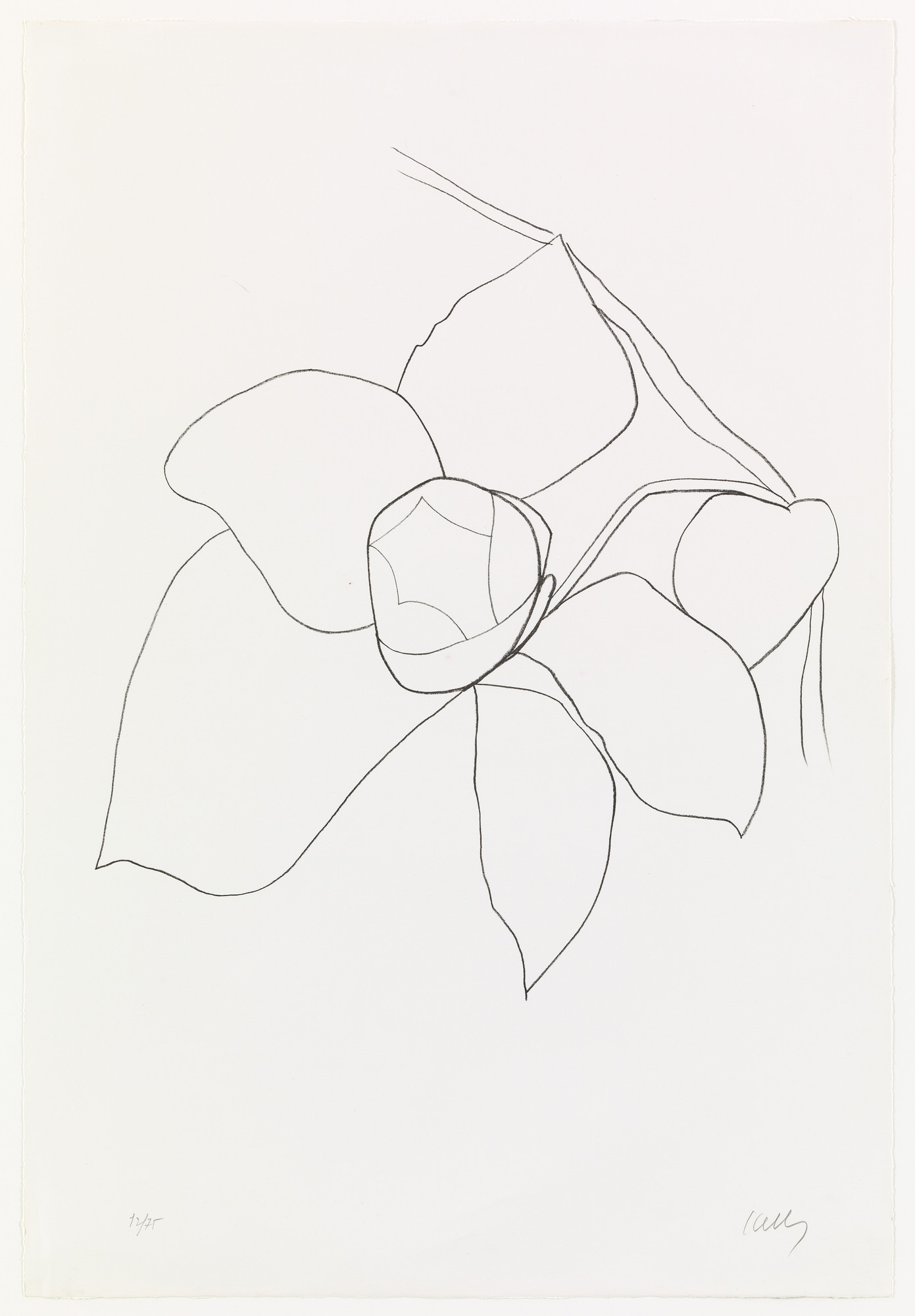 Ellsworth Kelly. Camellia II from Suite of Plant Lithographs. 1964–65, published 1966