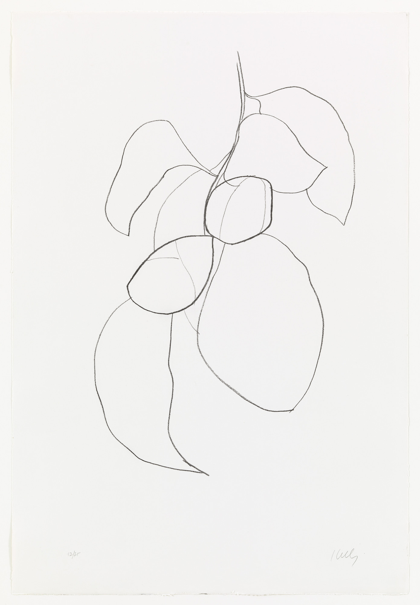 Ellsworth Kelly. Camellia III from Suite of Plant Lithographs. 1964–65, published 1966