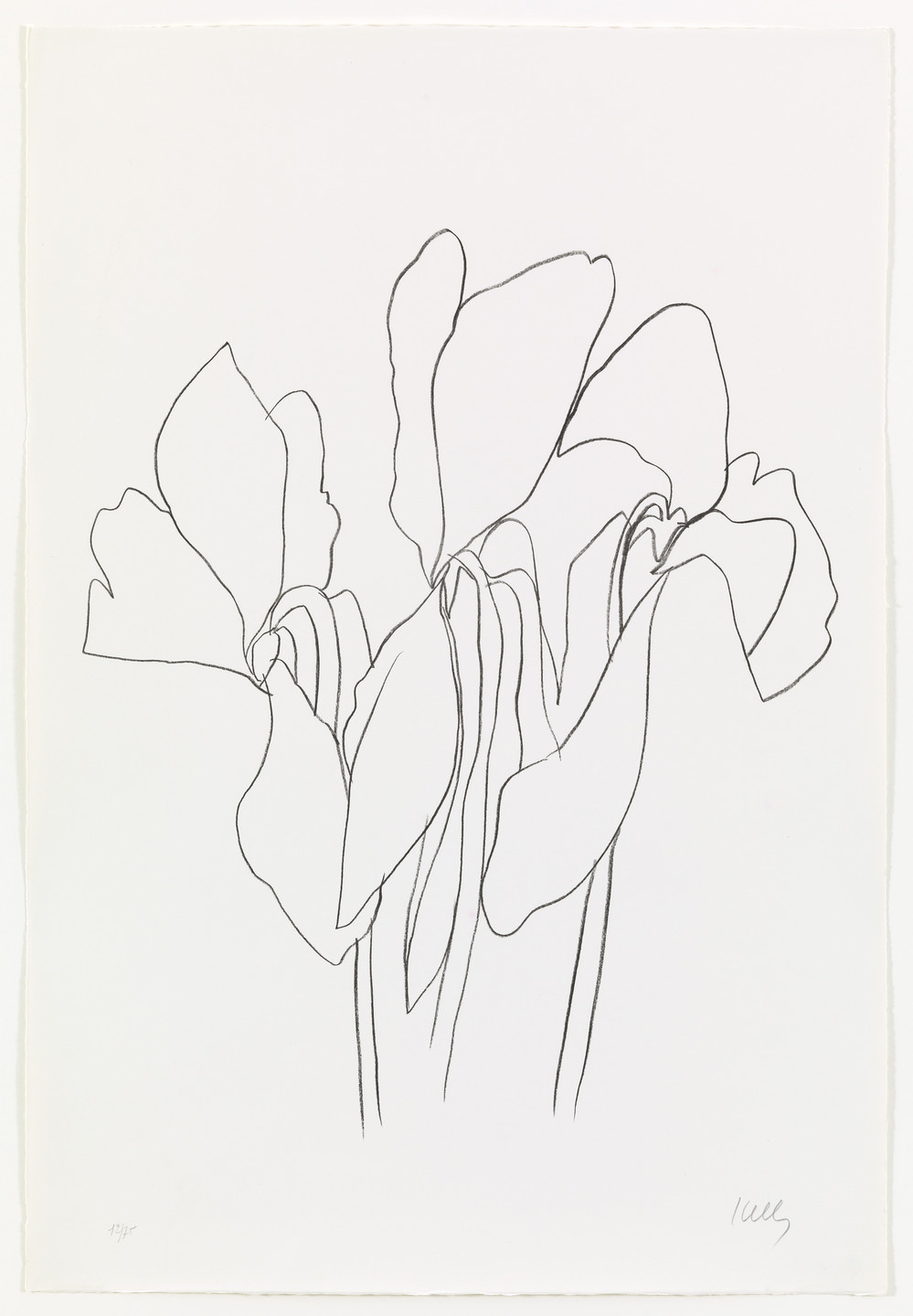 Ellsworth Kelly. Cyclamen V from Suite of Plant Lithographs. 1964–65, published 1966
