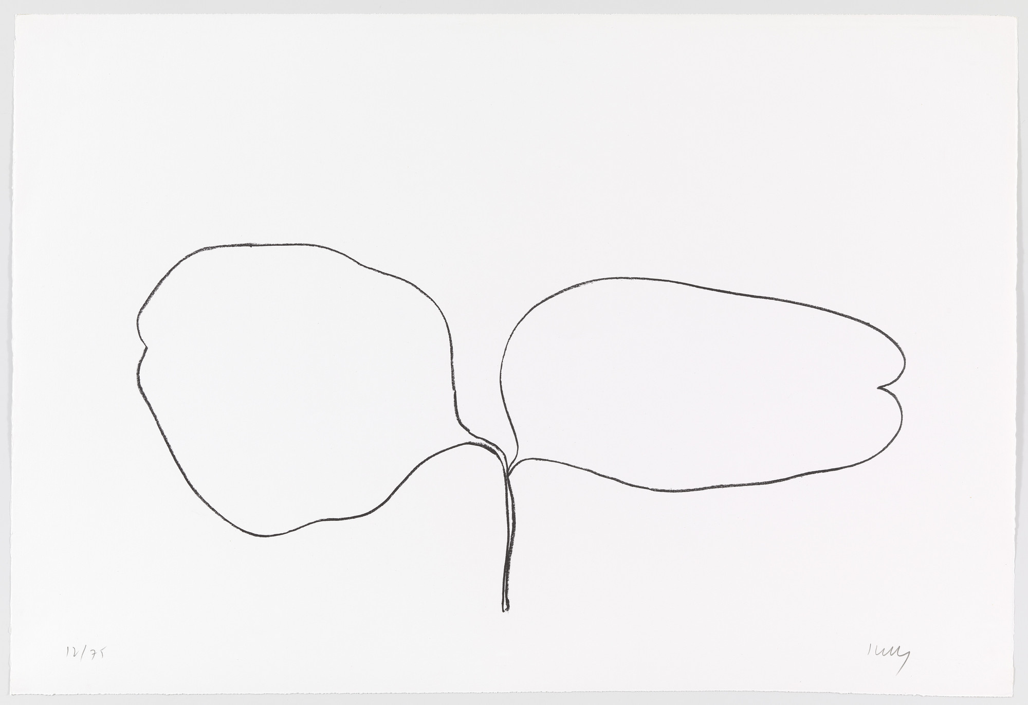 Ellsworth Kelly. Locust (Acacia) from Suite of Plant Lithographs. 1965–66, published 1966