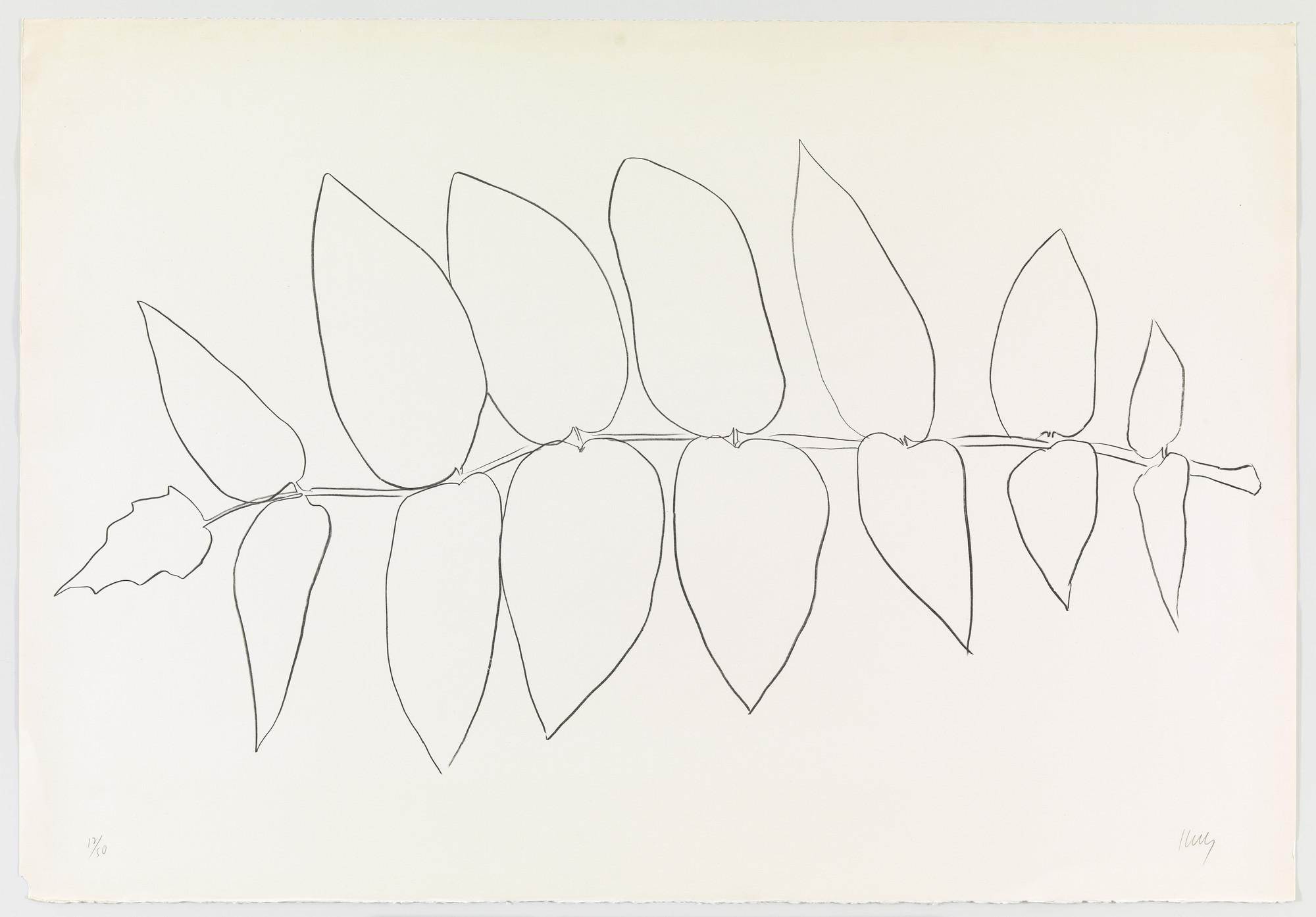 Ellsworth Kelly Ailanthus Leaves I Vernis Du Japon I From