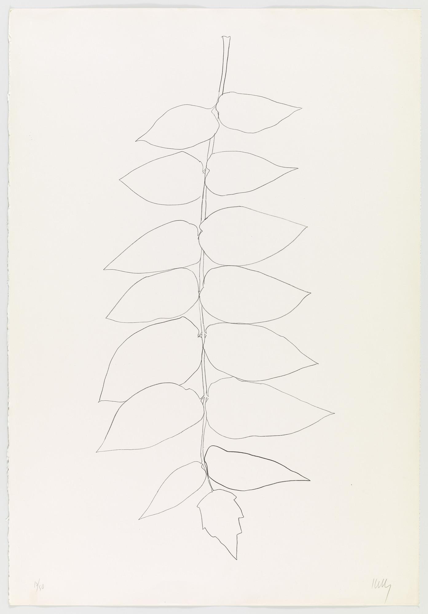 Ellsworth Kelly Ailanthus Leaves Ii Vernis Du Japon Ii