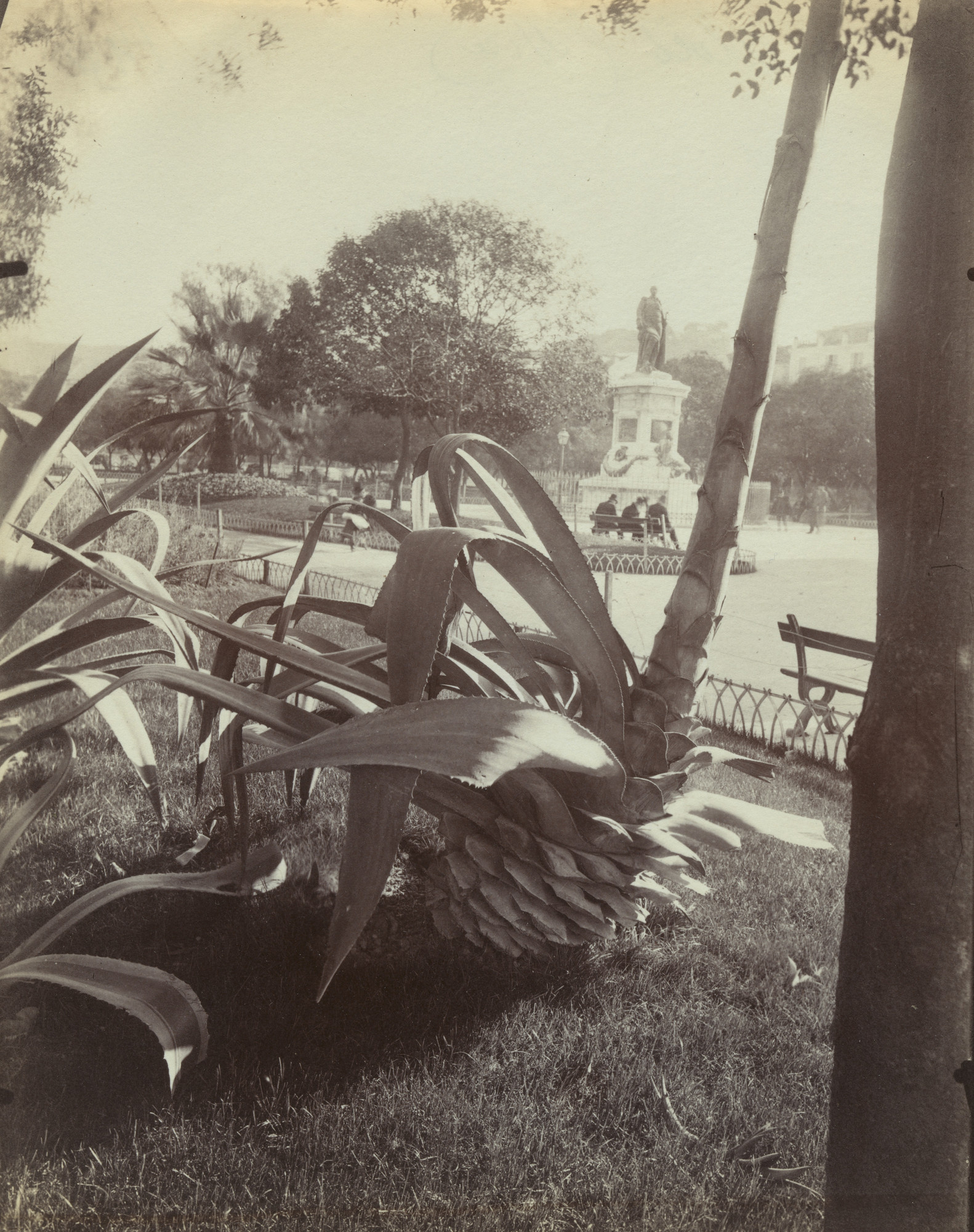 Eugène Atget. Aloes (Nice). Before 1900