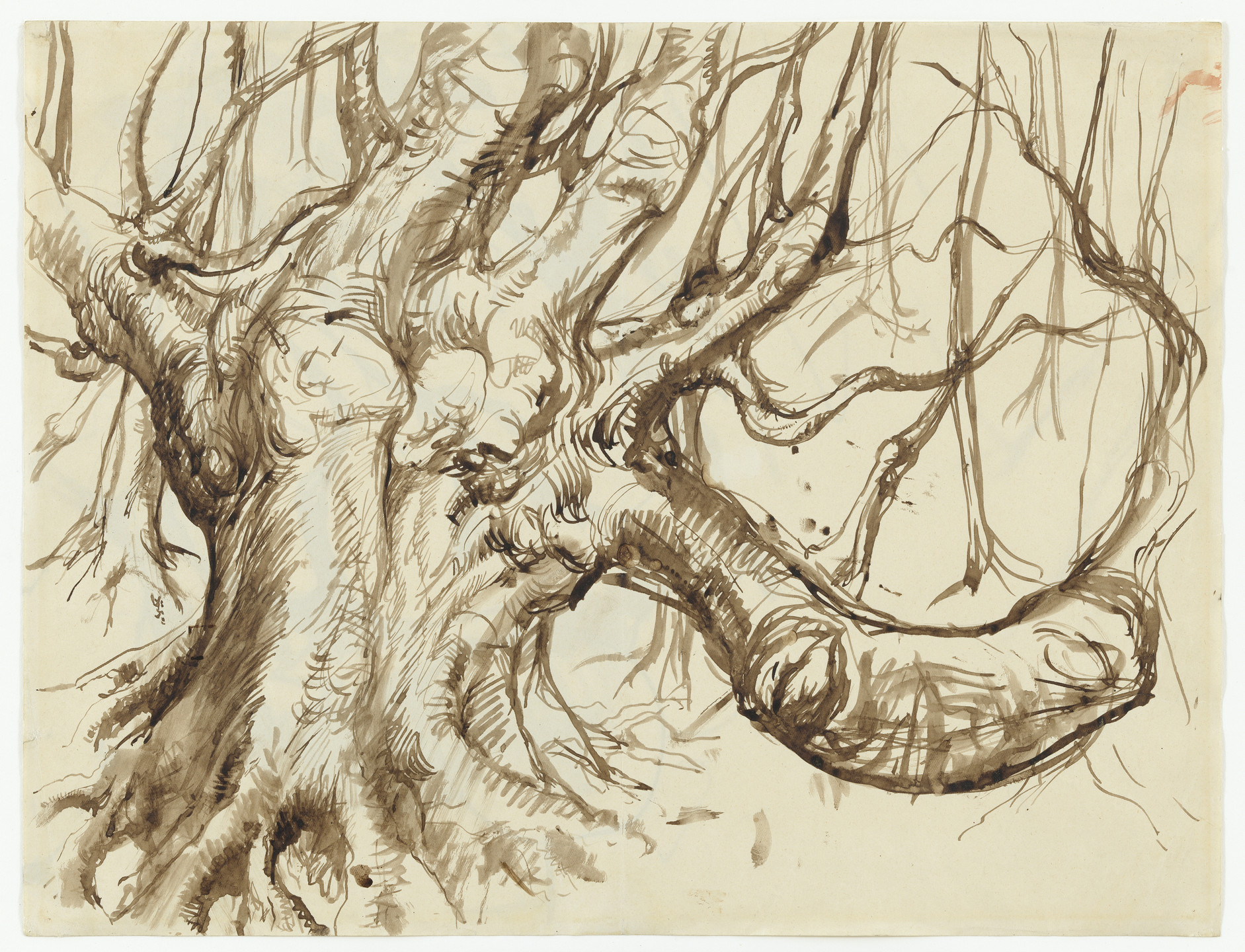 Pavel Tchelitchew. Tree in Sussex (Study for Hide-and-Seek). 1934