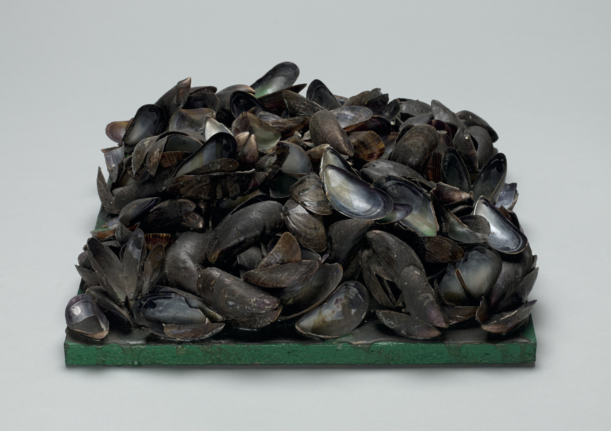 Marcel Broodthaers. Panel of Mussels. 1968