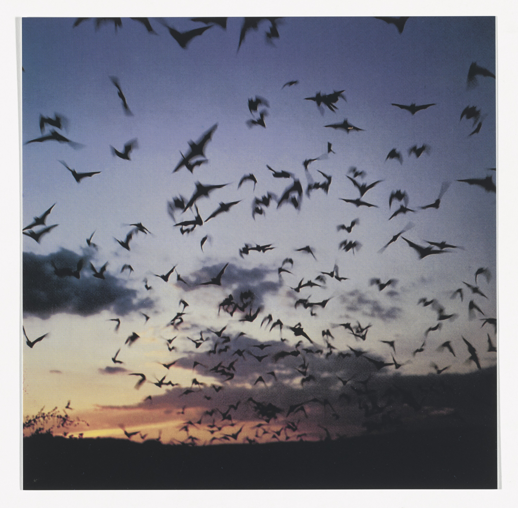 Jeremy Deller. Bats, 2011 from Odds and Sods (for Parkett no. 95). 2014