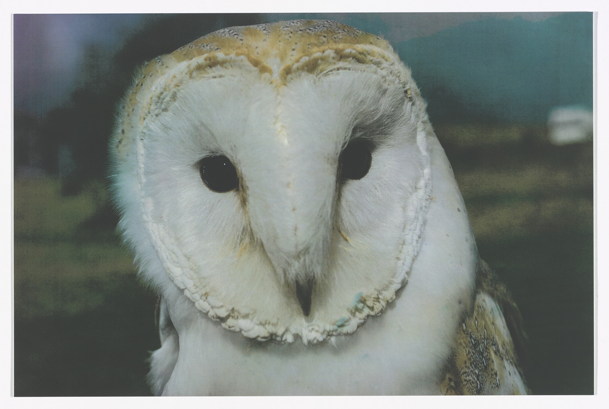 Jeremy Deller. Barn Owl, 2013 (from English Magic) from Odds and Sods (for Parkett no. 95). 2014