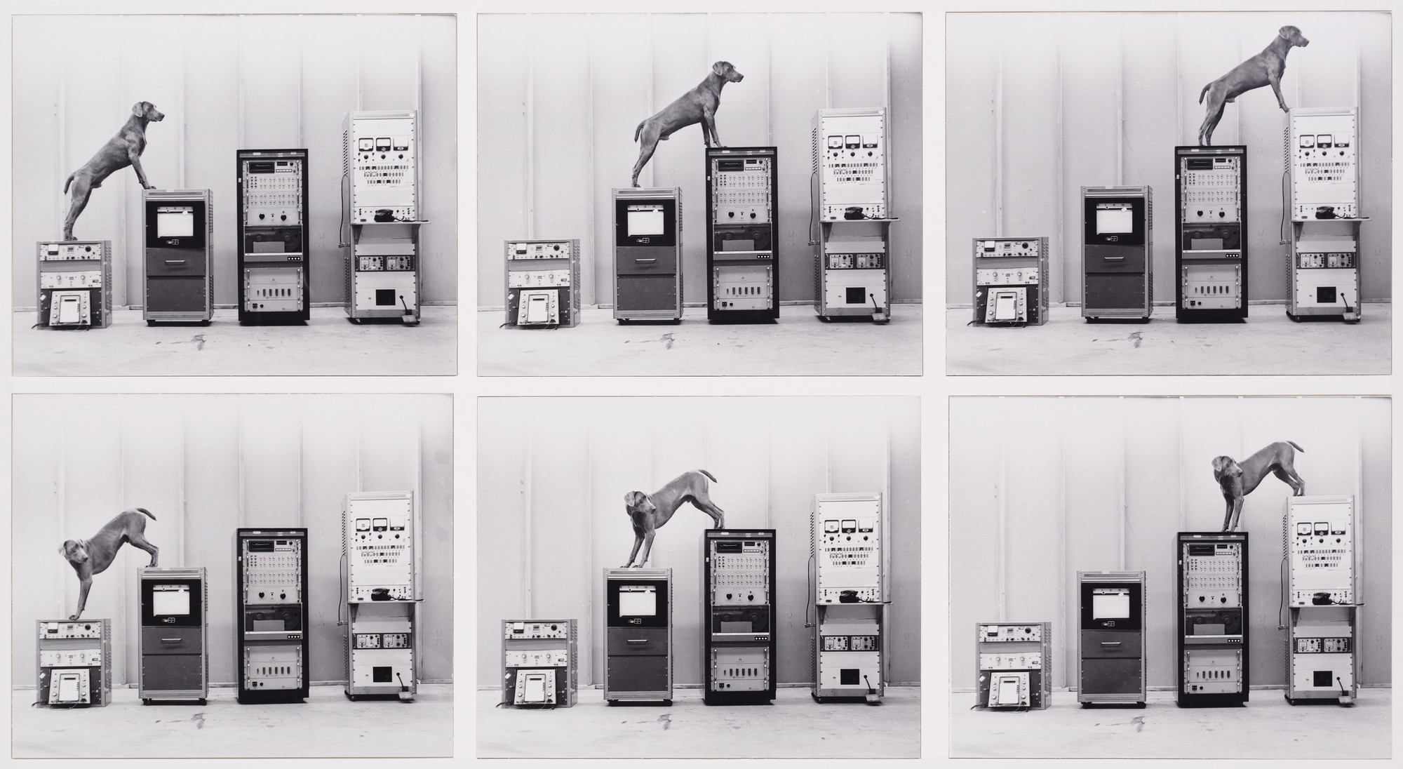 William Wegman. Ray-o-vac. 1973