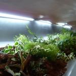 Slugplants2
