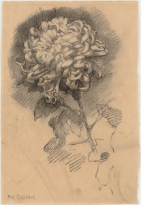 "Piet Mondrian (Dutch, 1872–1944). Chrysanthemum. 1906. Charcoal on paper, 14 1/4 x 9 5/8"" (36.2 x 24.5 cm). Gift of Mr. and Mrs. Armand P. Bartos"