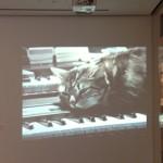 Cat_video-150x150