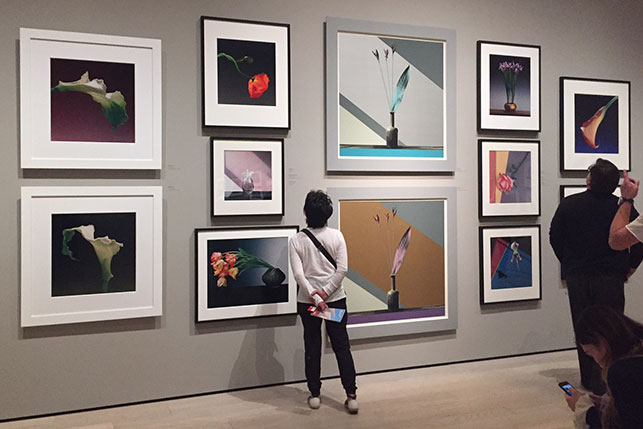 Installation view of Robert Mapplethorpe: The Perfect Medium, Los Angeles County Museum of Art, March 20–July 31, 2016. Photo: Annikka Olsen