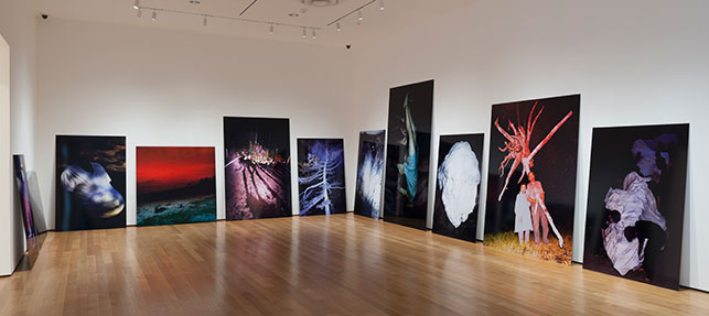 Lieko Shiga. Rasen Kaigan. 2009–12. Chromogenic color prints. Installation view, Ocean of Images: New Photography 2015, The Museum of Modern Art, November 7, 2015–March 20, 2016. © 2016 The Museum of Modern Art. Photo: Thomas Griesel